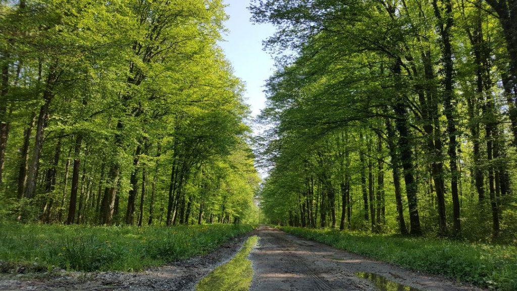 REpaška šuma mala